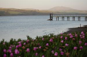 Peaceful flowers at dusk